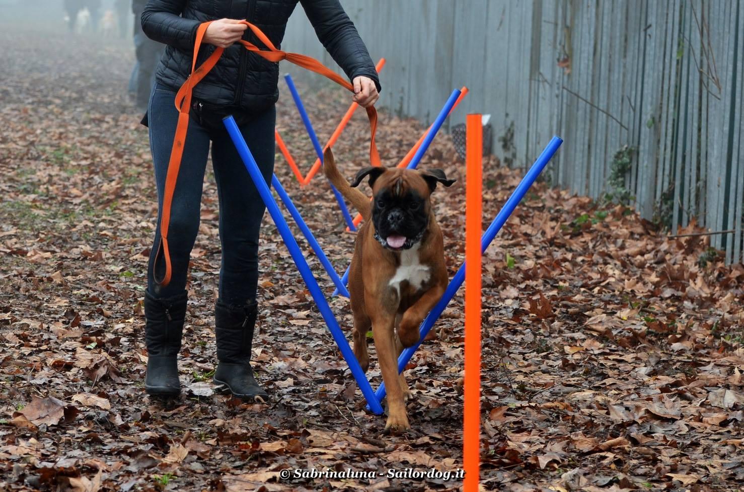 Sailor Dog - Educazione Cinofila