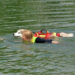 Sailor Dog - Associazione Cinofila di Salvataggio Nautico a Milano - Nuoto affiancato