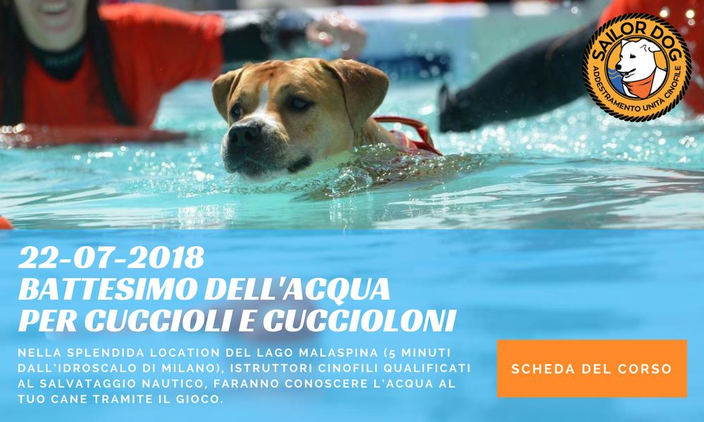 Sailor Dog - Associazione cinofila di Salvataggio Nautico - Milano - Battesimo dell'acqua per cuccioli e cuccioloni