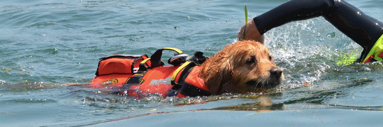 sailor_dog_slider_10