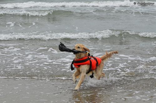 Esercitazione di salvataggio nautico al mare