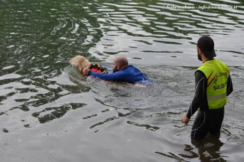 Nuoto a delfino